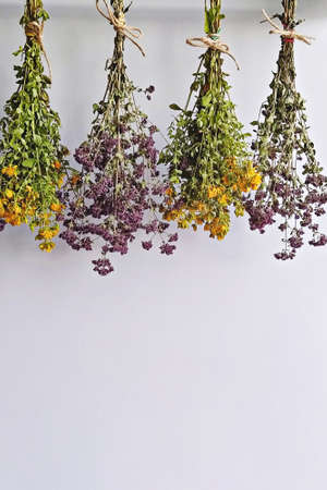 Dried herb bundles of oregano and tutsan hanging upside down to preservation on white with copy space. Methods of preservation for herbs or flowers for use in winter