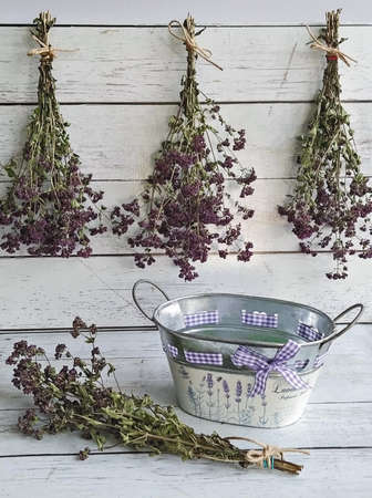 Harvesting herbs of oregano into bundles and preparation for drying concept. Methods of preservation for herbs or flowers for future use