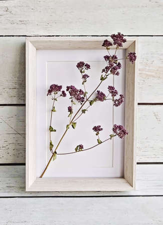 Branch of dry oregano flowers in picture frame on rustic background. Minimal autumn concept Stock fotó