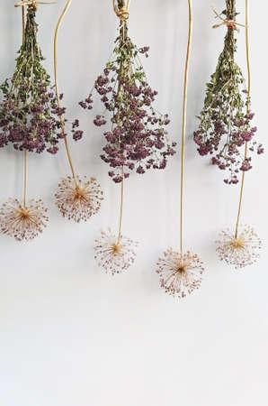 Dry inflorescence allium flowers and oregano bundles on white background. Minimalist floral background