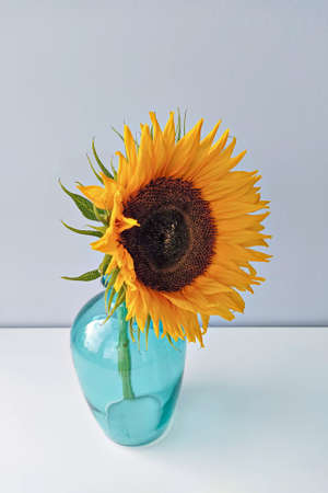 Single sunflower flower in blue vase against light background, vertical format Stock fotó