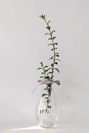 Modern transparent glass vase with plant on white wall