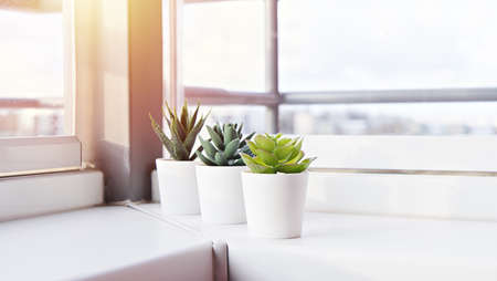 Succulents in pots on the windowsill. Mini cacti potted in white pots. Home decoration ideas.