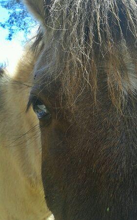 eye: Eye of horse