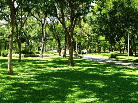 green meadows: park with green meadows and trees around Stock Photo