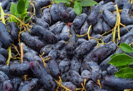 Raisin Moon Drops noir sans pépins ou raisin Witch Fingers. Fond de fruits frais.