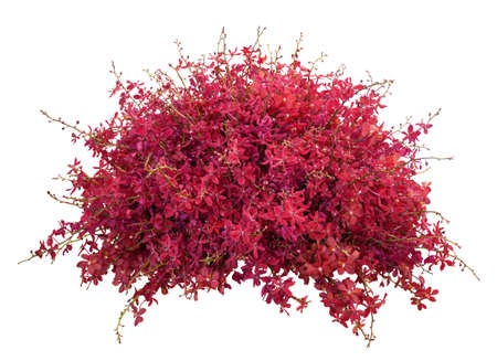 Red orchid flowers arrangement nature wedding backdrop isolated on white background Standard-Bild