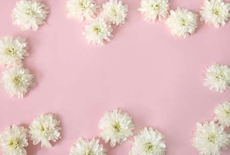 Spring composition with white daisy flowers on pink background. Flat lay, copy space.