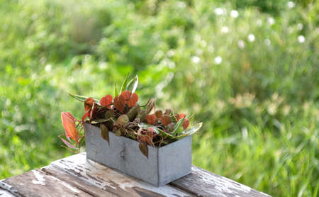 Outside planters with old zinc pot used as containers for growing plants. Waste recycling concept.