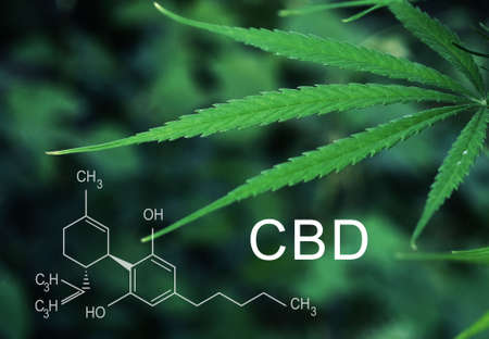 CBD chemical formula background of green cannabis leaves