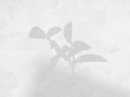 Shadow of natural leaves tree branch overlay on cement background, overlay effect for photo, mock up, product, wall art, design presentation Banque d'images