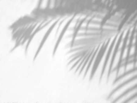 Tropical palm leaves shadow on a white wall background, overlay effect for photo, mock up, posters, stationary, wall art, design presentation