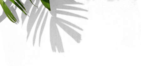 Leaves shadow and green leaves on concrete wall background, for overlay design on product , mockup, posters, stationary, wall art, design presentation