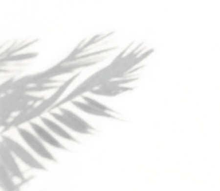 Tropical palm leaves natural shadow on a white wall, overlay effect for photo, mock up, product, wall art, design presentation Banque d'images