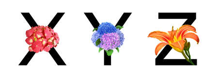 Flower font alphabet x, y, z made of real flowers. Collection of flora font for decoration in spring, summer concept.