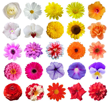 Set of different beautiful flowers on white background. Banque d'images
