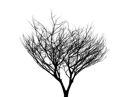 Tree without leaves silhouette on white background Banque d'images