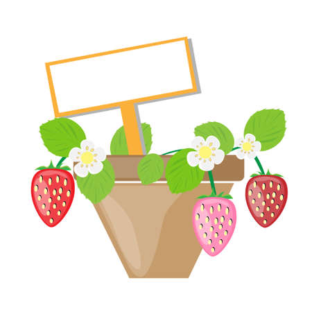 Strawberry vector background Vector