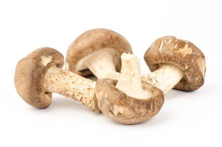 Fresh shitake mushroom on white background photo