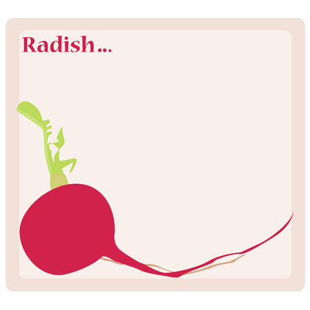 radish: Radish Illustration