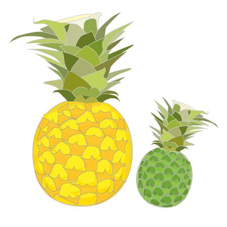 rindfleisch roh: Reife und rohe Ananas Vektor auf wei�em Hintergrund Illustration