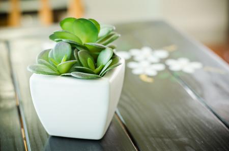 Small decorative plant in pot
