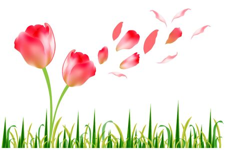 Beautiful tulip flower in the green grass Vector