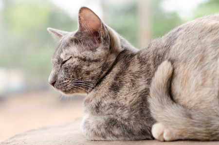 baby  pussy: Cute cat is relaxing on the wooden Stock Photo