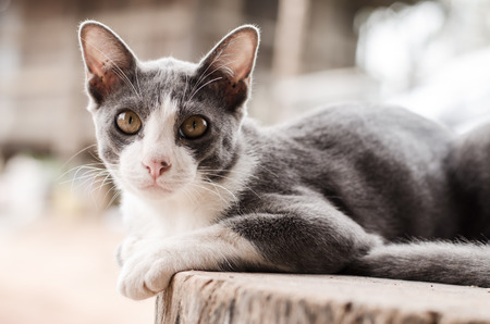 baby  pussy: Cute kitten (young cat) relax on the wooden