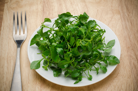 aquatic plant: Fresh watercress (aquatic plant) on white plate and wooden background Stock Photo