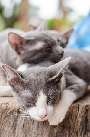 baby  pussy: Cute cats are sleep together on the wooden