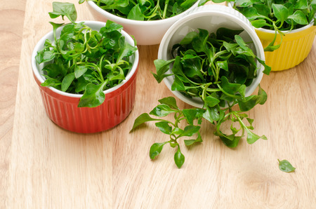 berros: Fresh watercress (aquatic plant) in the bowl,organic vegetable,clean eating
