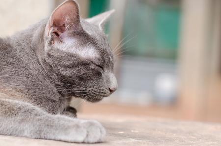 baby  pussy: Gray cat is sleeping on the wooden Stock Photo