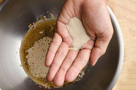 levadura: La levadura en la mano para cocinar pan