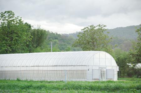 natual: Small greenhouse,organic farming