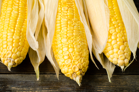 zea: Fresh corn on wooden background