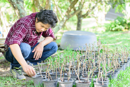 Asian young farmer planting and propagation of plant in organic farm Stock Photo