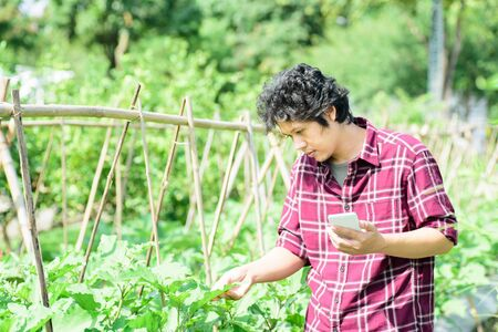 Asian young farmer using smartphone for management in agricultural field Stock Photo