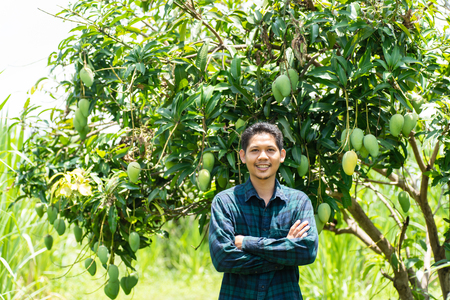 Young Asian farmer standing in organic mango farm Stockfoto