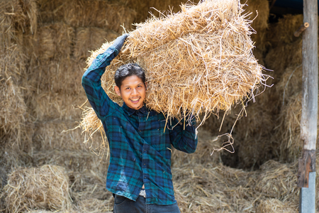Asian young farmer carry organic rice straw for livestock in a farm Stock Photo