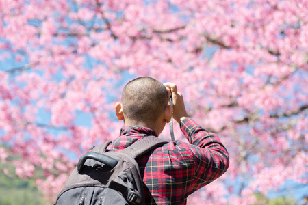 Back view of man taking photo of cherry blossom in spring season Stock Photo