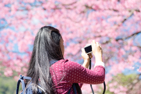 Back view of woman taking photo of cherry blossom in spring season