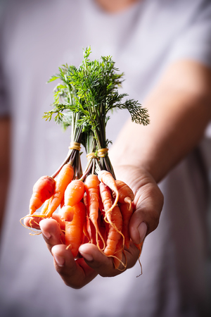 Fresh carrots holding by hand