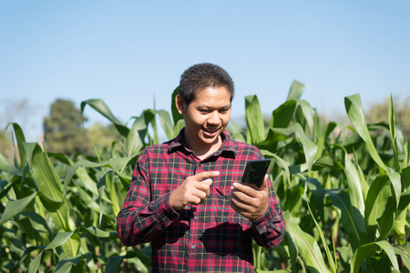 Asian farmer using smartphone in corn field Stock Photo