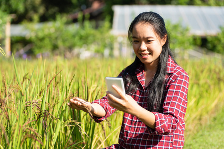 Asian woman farmer using smartphone in rice field