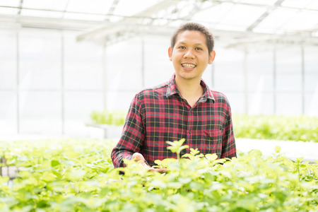 Asian farmer in hydroponics vegetables farm Stock Photo