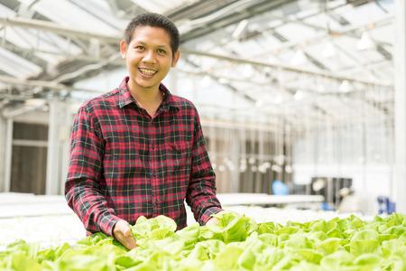 Asian farmer harvesting vegetables in hydroponics farm