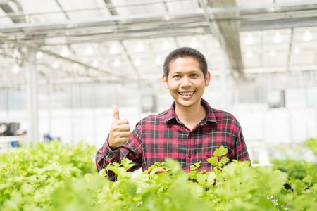 Asian farmer showing thumb up in hydroponics vegetables farm