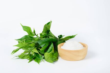 Gymnema inodorum leaf and sugar on white background, medicine herbal plant for diabetes treatment, function is control sugar level in blood Reklamní fotografie