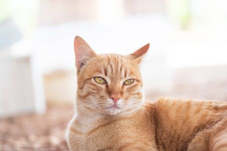 Close up of ginger cat looking something, cute pets